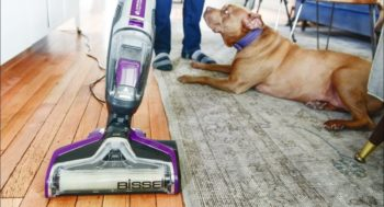 Cleaning House Carpet with Pets